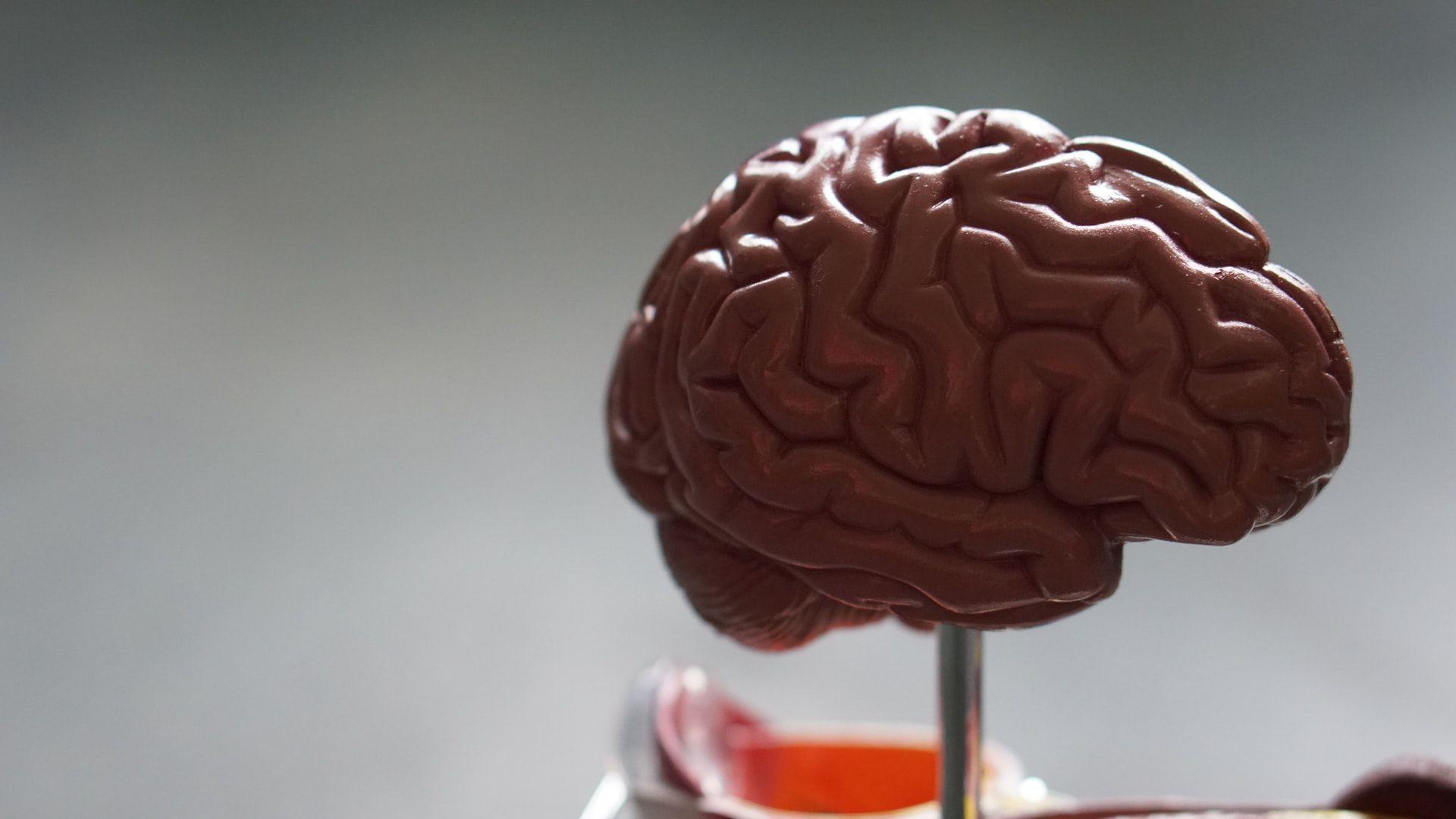 Quanta memoria ha a disposizione un cervello umano?