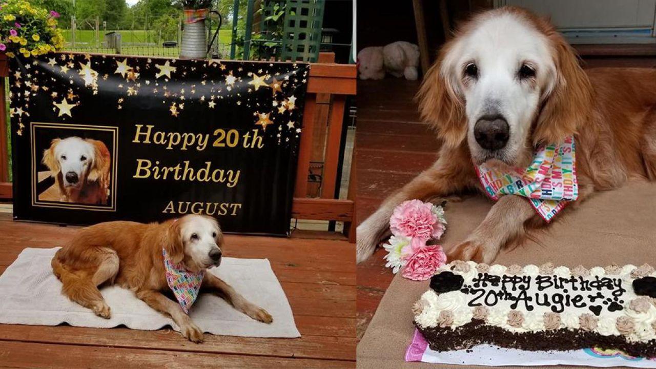 Questa simpatica cagnolina è il Golden Retriever più vecchio del mondo: ha 20 anni