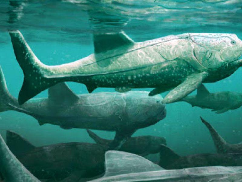 Questi pesci vecchi 380 milioni di anni si nutrivano in modo simile allo squalo elefante