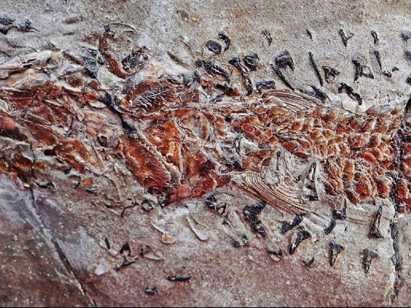 Questo fossile immortala una lotta per la sopravvivenza di 200 milioni di anni