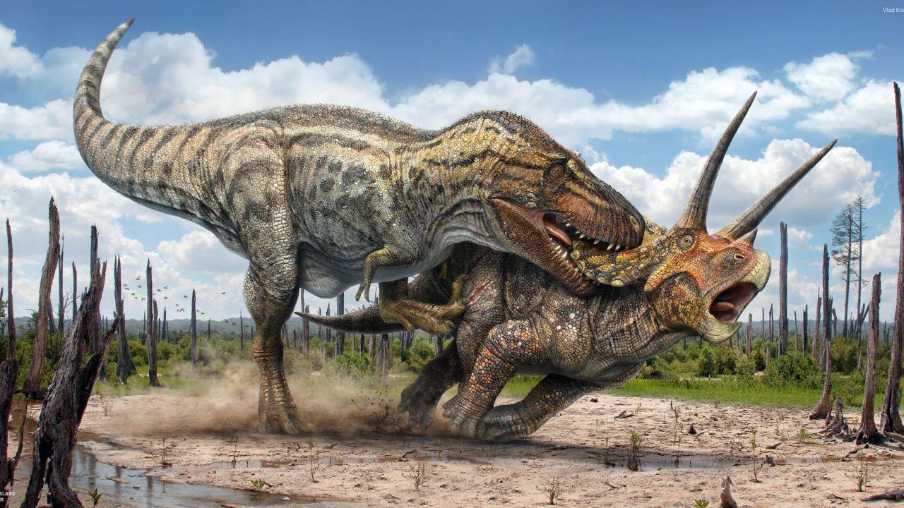 Questo fossile ci mostra un possibile scontro tra un T.rex e un triceratopo