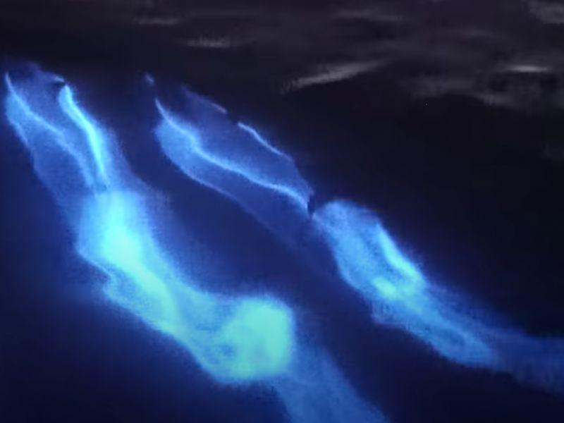 Questo incredibile video ci mostra la 'danza bioluminescente' di due delfini