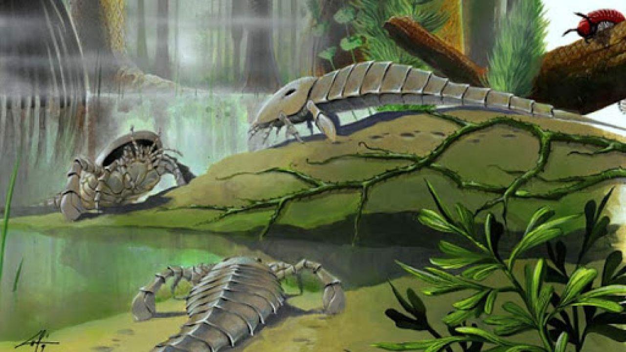 Questo scorpione marino circa 350 milioni di anni fa respirava aria sulla terraferma