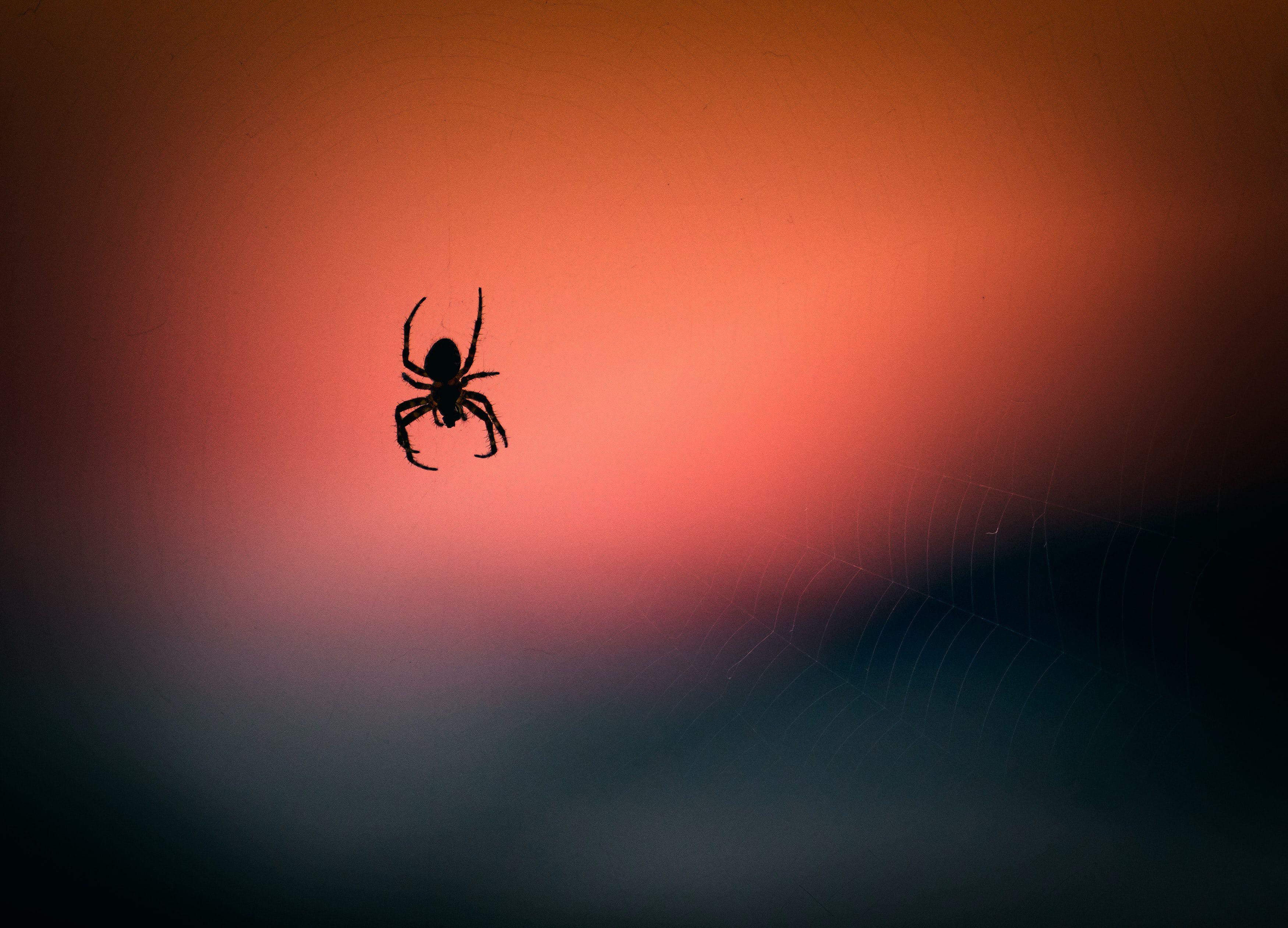 Scienziati hanno mutato orribilmente questi ragni... in nome della conoscenza