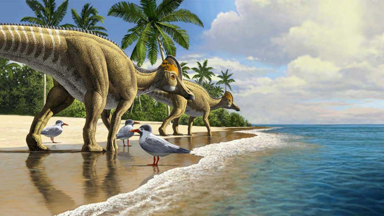 Scoperta una nuova specie di 'dinosauri dal becco d'anatra' in Africa