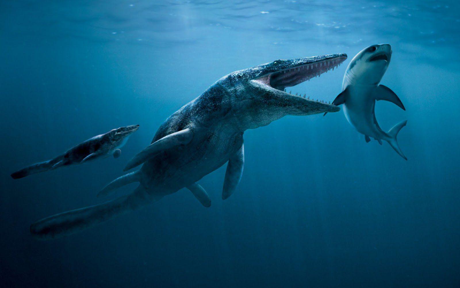 """Scoperta una nuova specie di """"mostro marino"""", il mosasauro, in Marocco"""