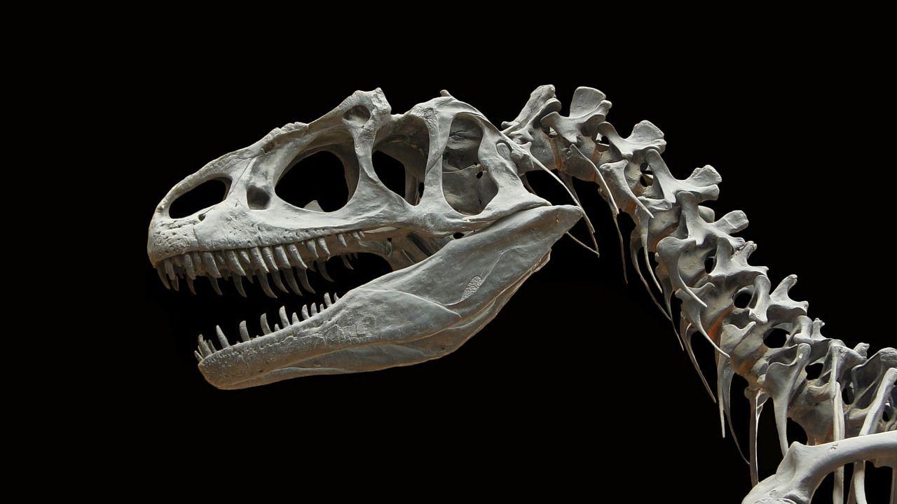 Scoperta la probabile temperatura corporea dei grandi dinosauri