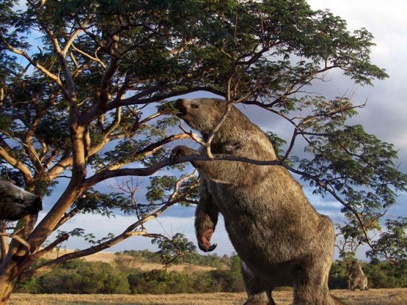 Scoperto un cimitero dell'era glaciale contenente i resti di 22 bradipi giganti