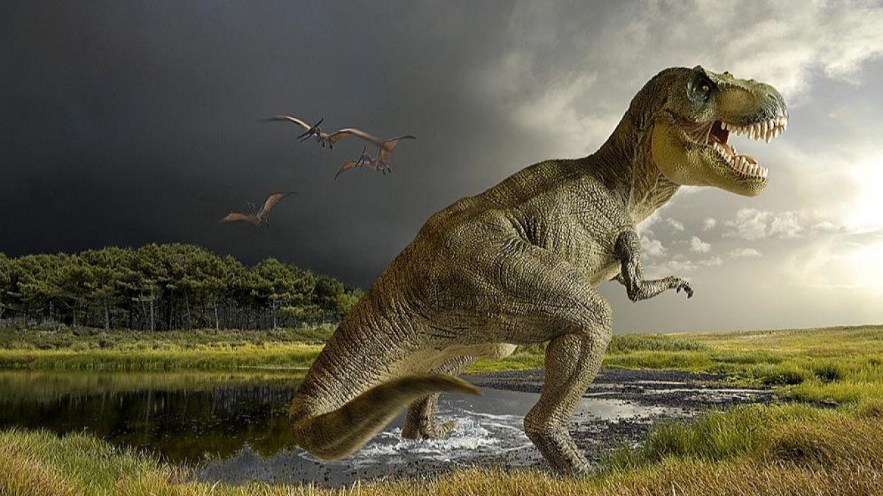 Scoperto un fossile di un cucciolo non nato del terribile Tyrannosaurus rex
