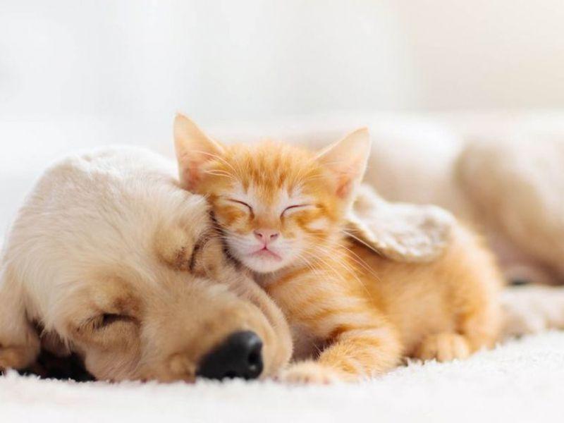 Secondo la FDA anche i nostri cani e gatti dovrebbero praticare il distanziamento sociale