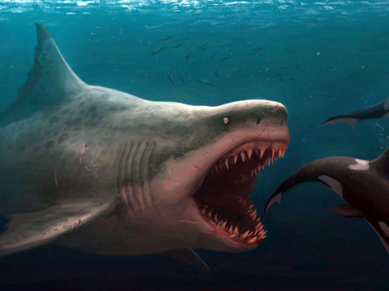 Shark - Il Primo Squalo: cifre mostruose per il film con Jason Statham
