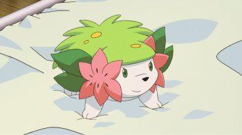 Shaymin è ora disponibile tramite Dono Segreto su Pokemon X, Y, Zaffiro e Rubino