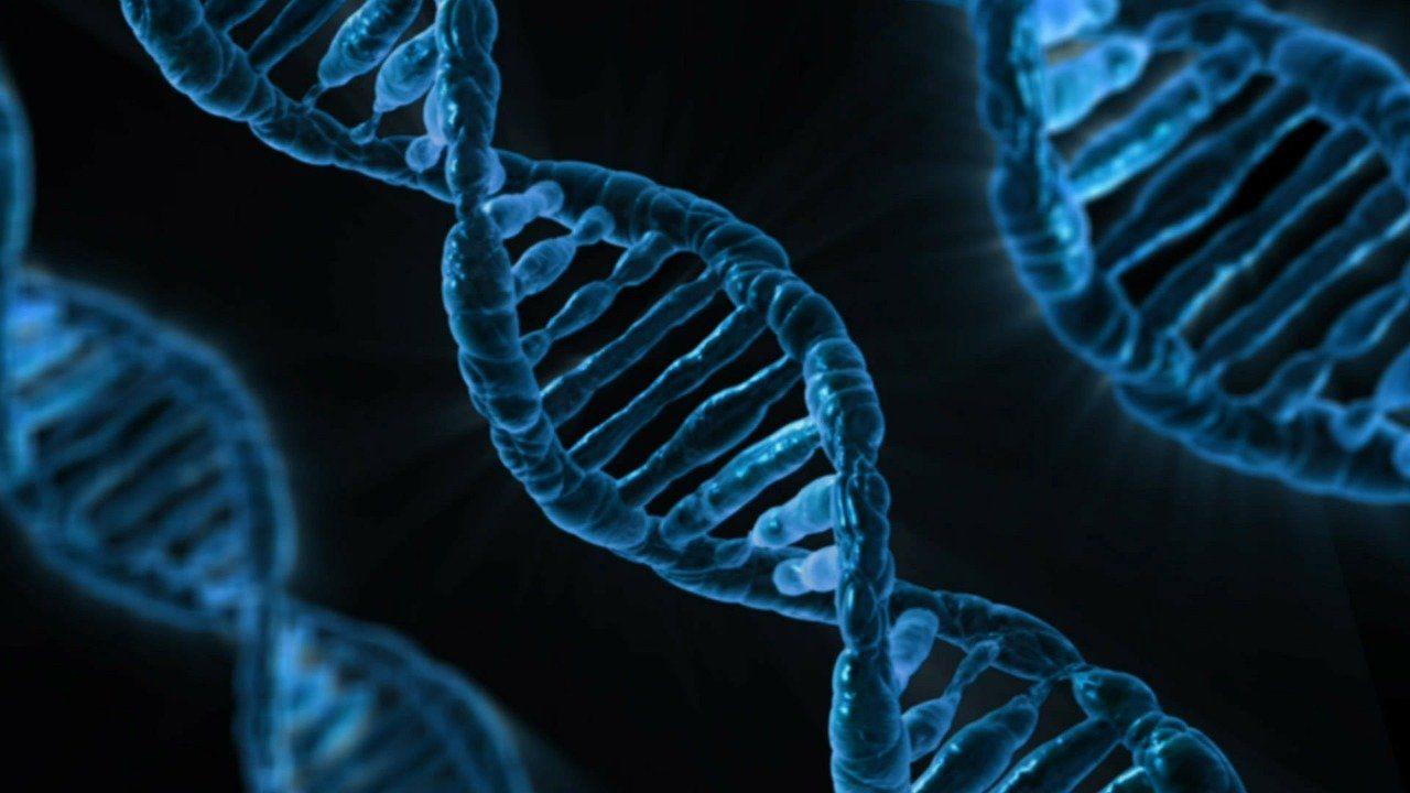 Soltanto una piccolissima frazione del nostro DNA è unicamente umano