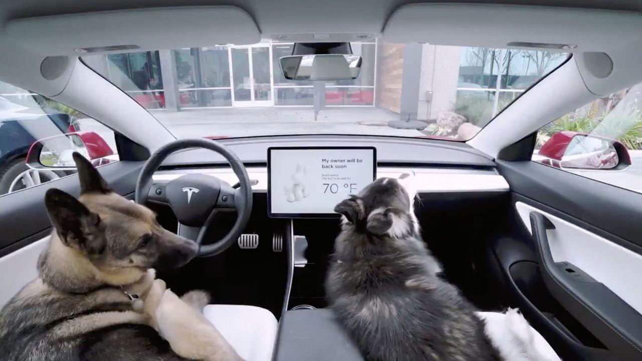 Tesla lancia la Dog Mode, per tenere al caldo i cani mentre attendono in auto