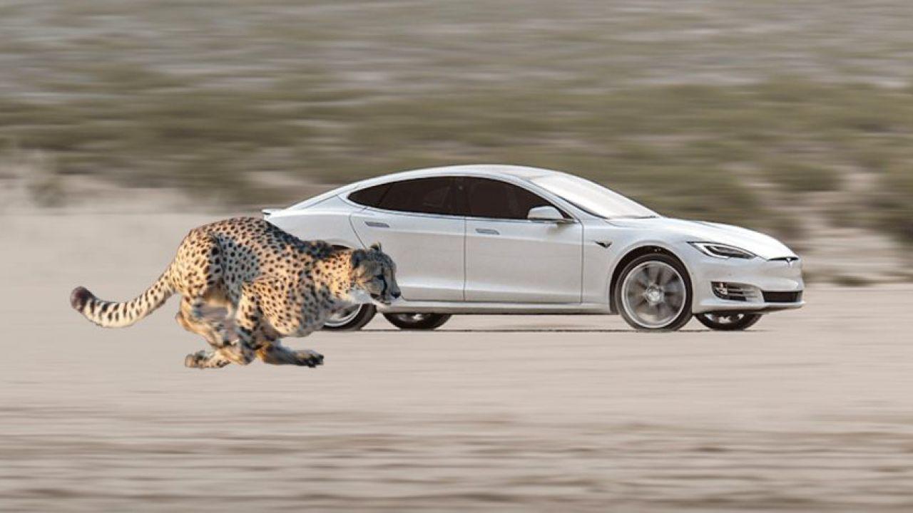 Tesla al lavoro su un 'Assetto Ghepardo', ma di cosa si tratta?