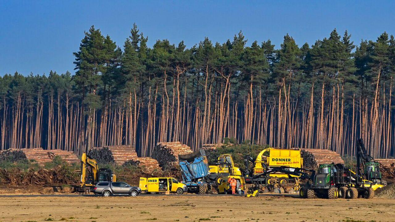 Tesla ha ricevuto il via libera: può abbattere gli alberi per costruire Giga Berlin
