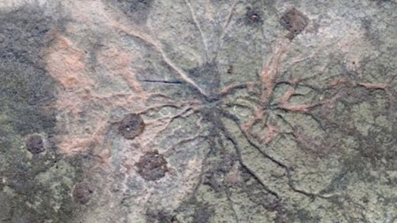 3 tipi di datazione fossile gratis online dating Sud Africa Johannesburg