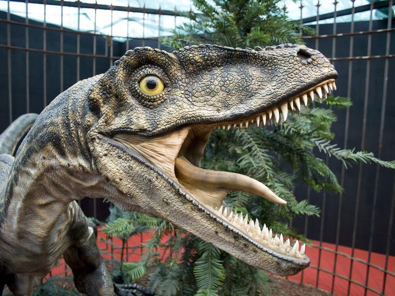Tutto quello che non sapevamo sui temibili velociraptor
