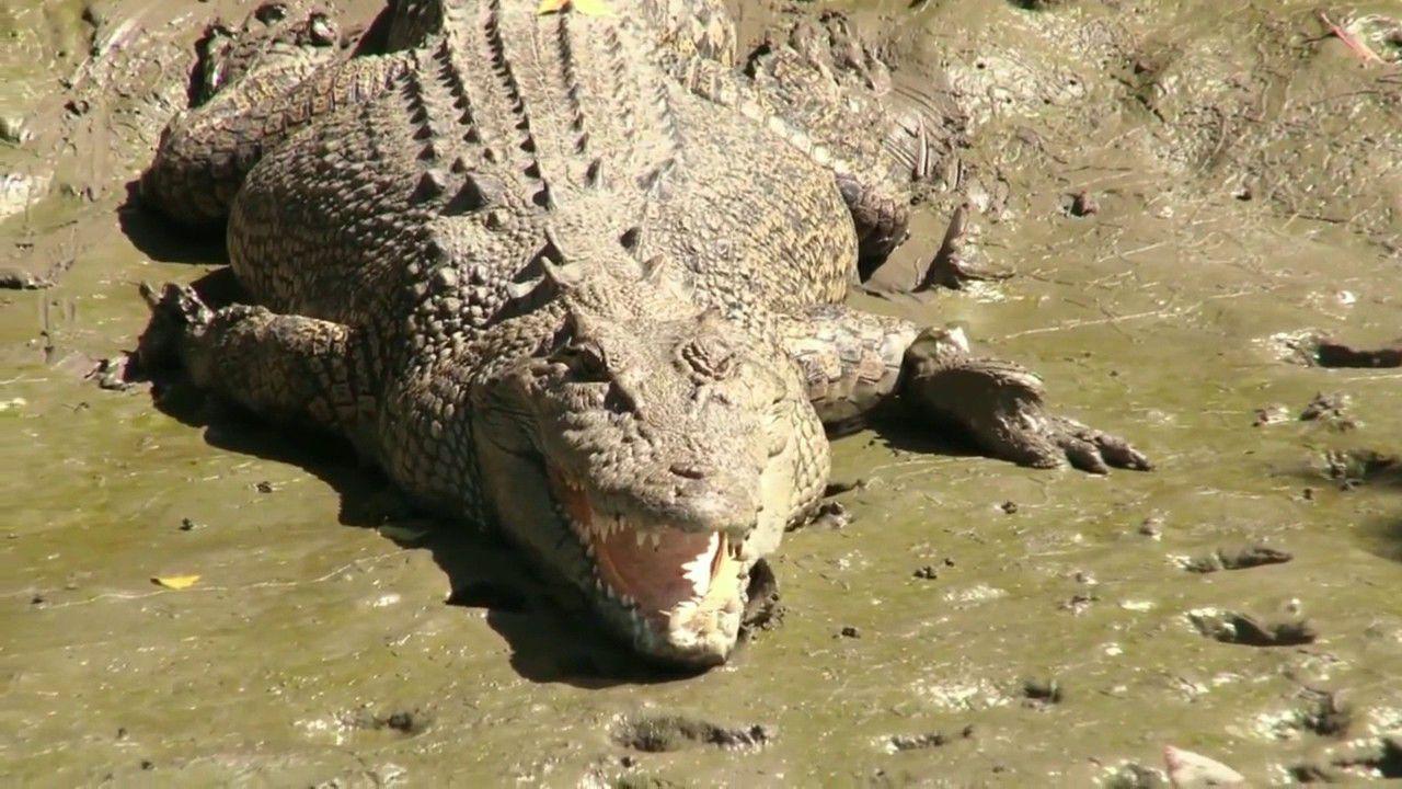 Un coccodrillo di 4 metri è stato trovato con resti umani nello stomaco