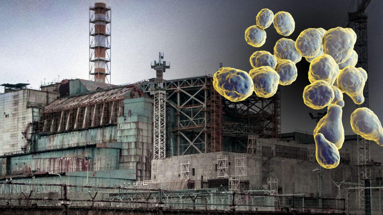 Un fungo 'mangia-radiazioni' di Chernobyl potrebbe proteggere gli astronauti su Marte