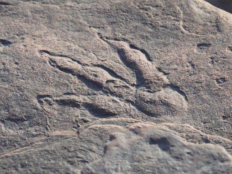 Una bambina di quattro anni scopre un'impronta di dinosauro sulla spiaggia