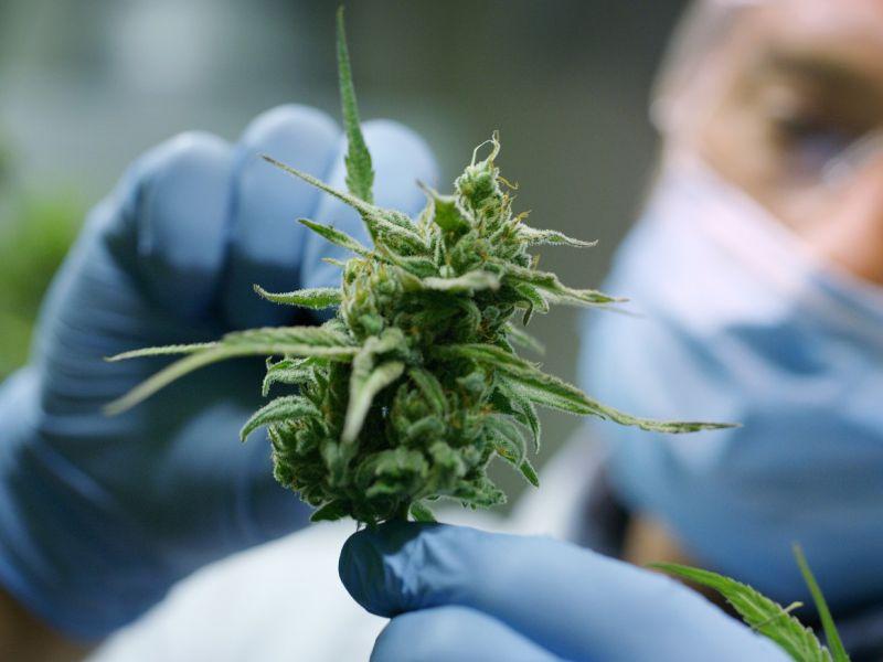 Uno studio a lungo termine ci racconta degli effetti sociali del consumo di cannabis