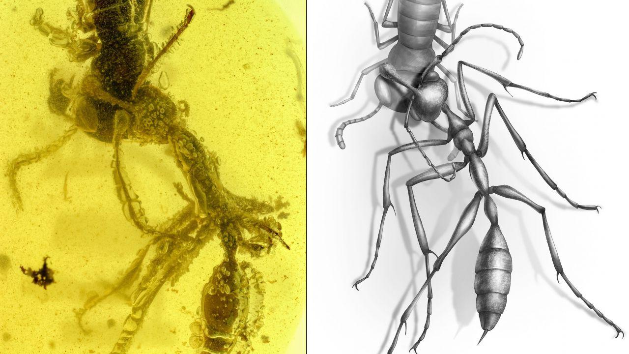 Venite a conoscere la 'formica infernale', esistita sulla Terra 99 milioni di anni fa