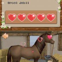 Immagini Championship Pony