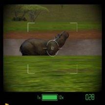 Immagini Jambo! Safari