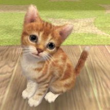 Immagini Nintendogs + Cats