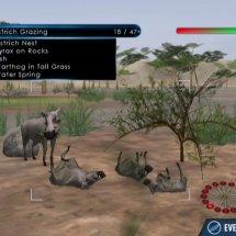 Immagini Wild Earth: African Safari
