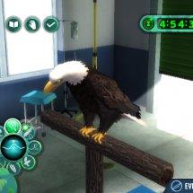 Immagini Zoo Hospital