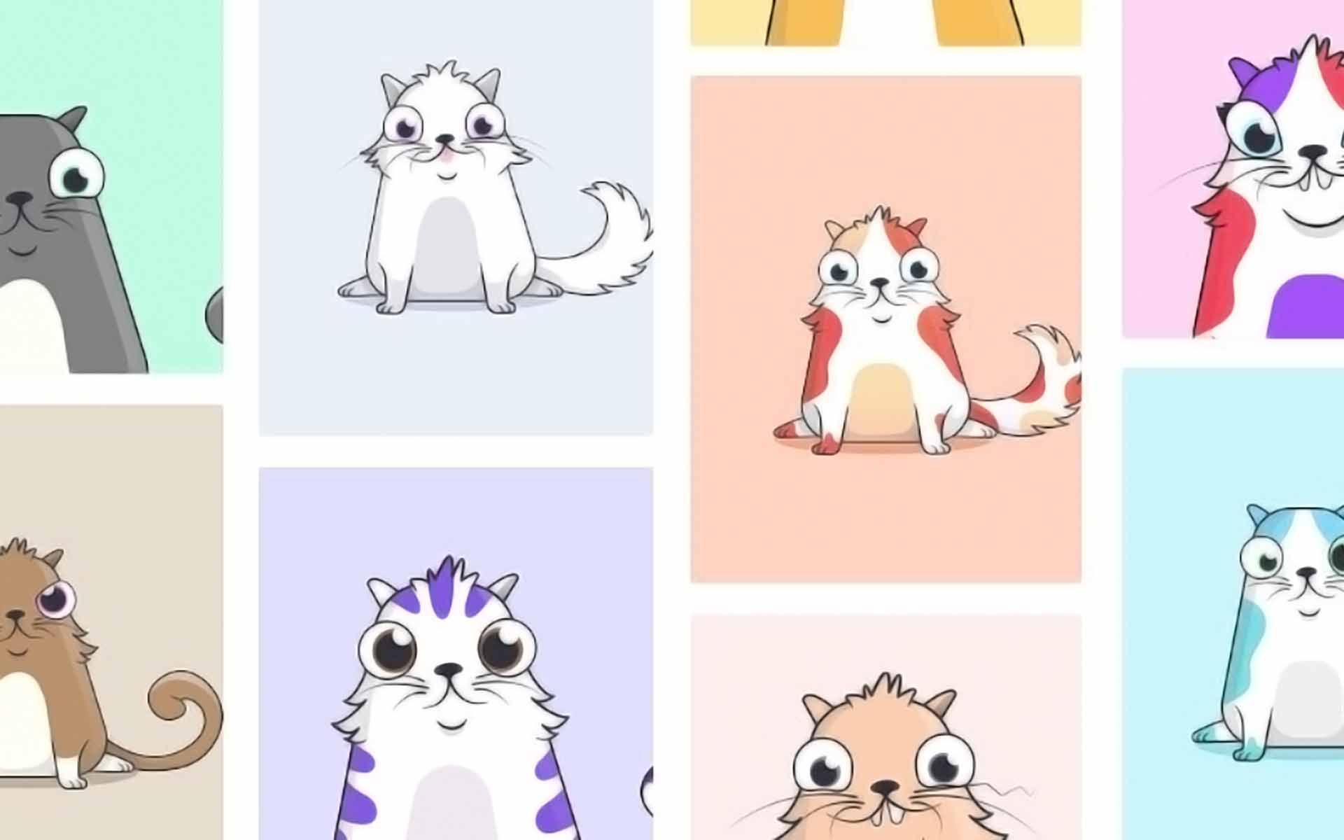 gatto e un bitcoin